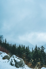 Foggy Mountain View with pine trees and rocks in winter with snow