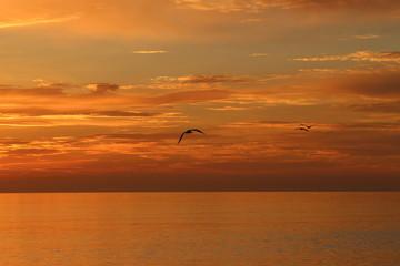 Atemberaubender Sonnenuntergang am Meer mit Möwe