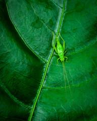 green on greeb