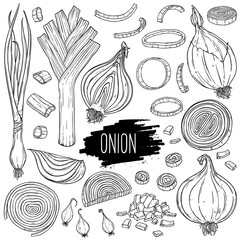 Hand drawn onion set. Isolated bulb, slices, halves, pieces, green onion and leek. Vegetarian food design for shop, book, menu, poster, banner. Outline ink slyle sketch. Vector coloring illustration.