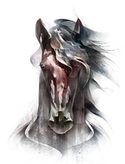 painted colored horse portrait isolated in front