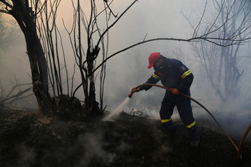 Wildfire burns in Evia