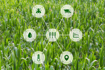 Agritech concept graphic display on field of crops background