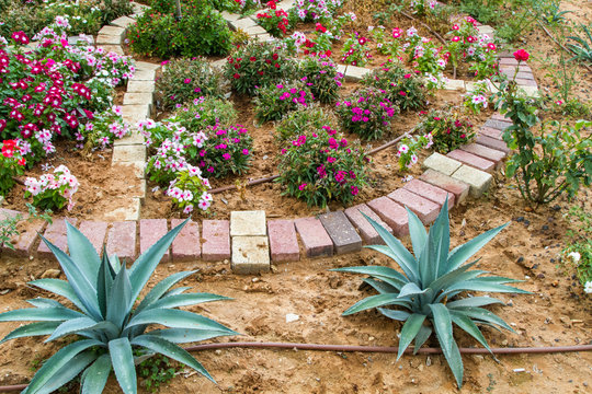 Flowerbed, drip irrigation system in park of Israel