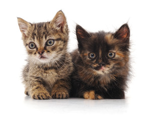Two small kittens.