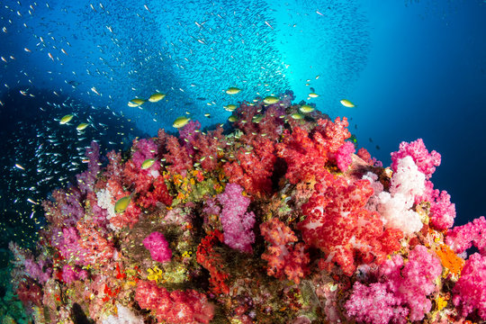 A beautiful, brightly colored tropical coral reef in a tropical ocean