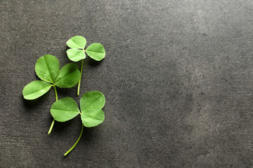 Green clover leaves on gray background, flat lay composition with space for text