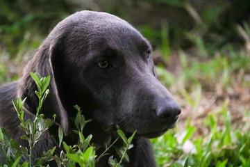 Dog Grey