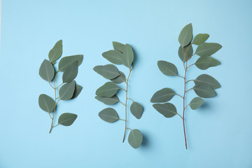 Eucalyptus branches with fresh leaves on color background, flat lay