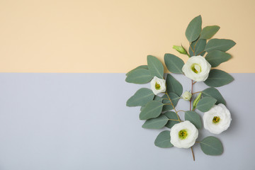 Fresh eucalyptus leaves with flowers and space for design on color background, flat lay