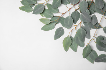Fresh eucalyptus leaves on white background, top view