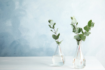 Eucalyptus branches with fresh leaves in vases on table