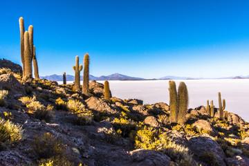 Cold Desert #1