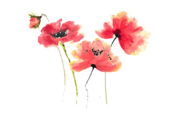 Stylized poppy flowers on white, watercolor illustrator