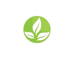 green leaf ecology nature element