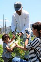 大根の収穫をする家族