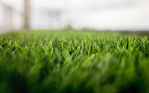 Artificial grass in the design