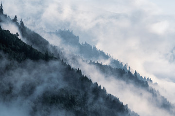 Forested mountain slope in low lying valley fog with silhouettes of evergreen conifers shrouded in mist.