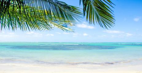 Ferien, Tourismus, Sommer, Sonne, Strand, Auszeit, Meer, Glück, Entspannung, Meditation, Palmen, Mangroven: Traumurlaub an einem einsamen, karibischen Strand :)