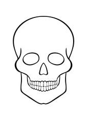 hand-drawn contour skull