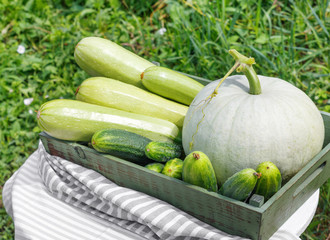 Harvest of ripe cucumber squash and pumpkin in  wooden box on  wooden table