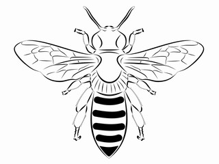illustration of a bee , vector draw