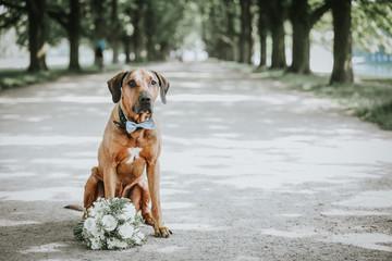 Hund auf Hochzeit Fotobehang