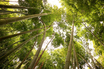 Looking up the Bamboo Forest, at Takao.