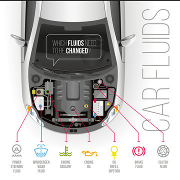 Car Fluids/Which fluids need to be changed under the hood of the car?