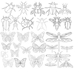 set book coloring insects character, ladybug, beetle