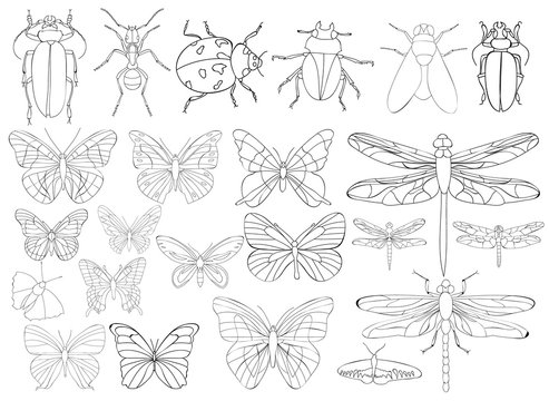 insects set, book coloring pages
