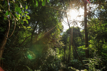 Tropical green forest landscape with ray of sunrise light