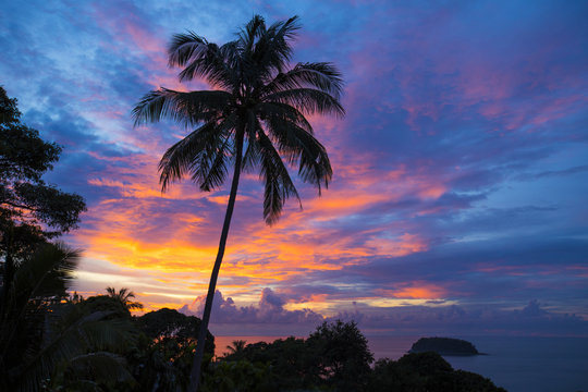 View of palm tree against cloudy sky at sunset