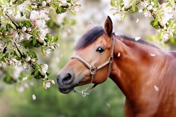 Horse in spring