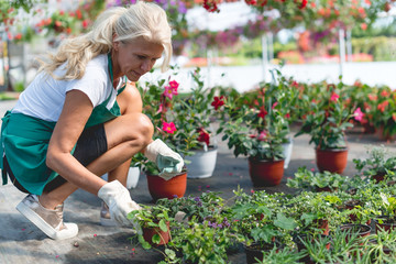 Senior women planting flowers in greenhouse