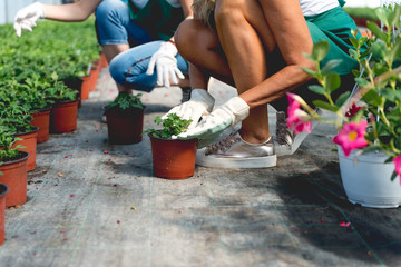 Planting flowers in green house
