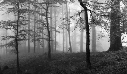 Forest. Ukraine