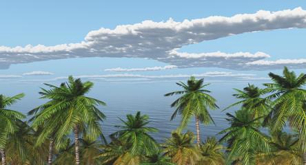 Palmen am Meer