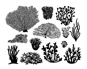 Set of sea corals and seaweed black silhouette. Vector illustration. Isolated on white background