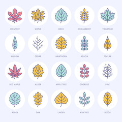 Autumn leaves flat line icons. Leaf types, rowan, birch tree, maple, chestnut, oak, cedar pine, linden,guelder rose Thin vector signs of nature plants