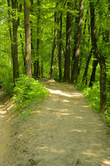Wall Murals Road in forest An empty gravel path in a dense green forest surrounded by tall trees against the background of the sun passing through them.