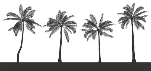 Set of silhouettes of palm trees on white isolated background. Hand drawn realistic contour. Template for printing and design of T-shirt, booklet, card, poster in tropical style. Vector illustration.