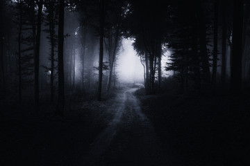 scary path in dark forest at night, surreal landscape