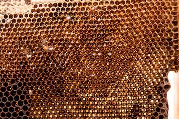 dark slices of wax with honey