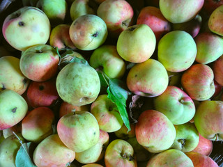 Apples background, rich harvest of apples