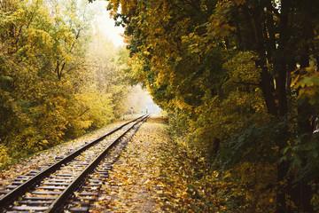 Railway tracks landscape running through autumn forest
