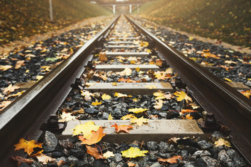 Railway tracks closeup running through autumn forest