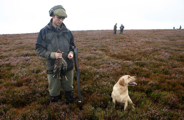 A member of a shooting party on Forneth Moor holds a grouse shot on the opening day of the grouse shooting season, Scotland