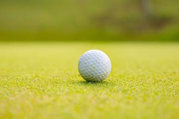 ゴルフ場のグリーンとゴルフボール