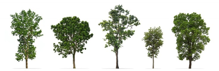 Collection of trees isolated on white background Wall mural